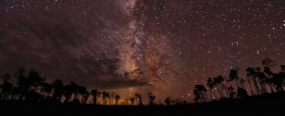 StarrySkyTrees