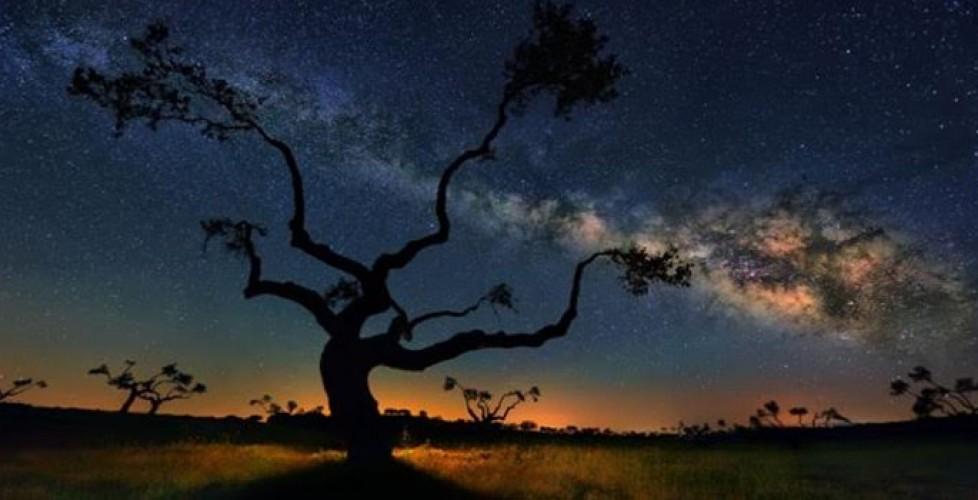 Cosmic Nightlife