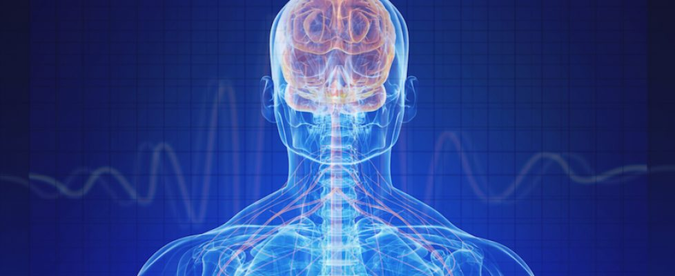 Brain&Body
