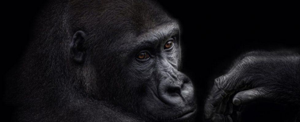 AnimalIntelligence
