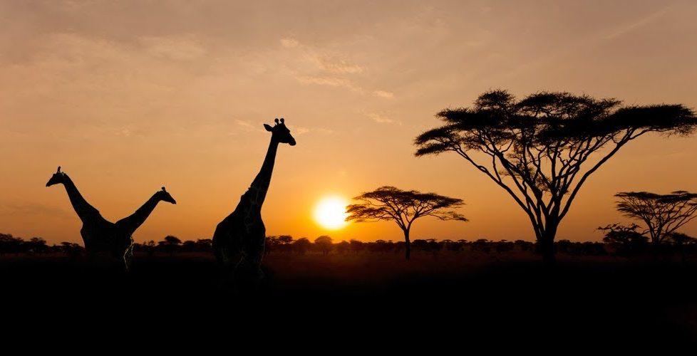 SerengetiRules