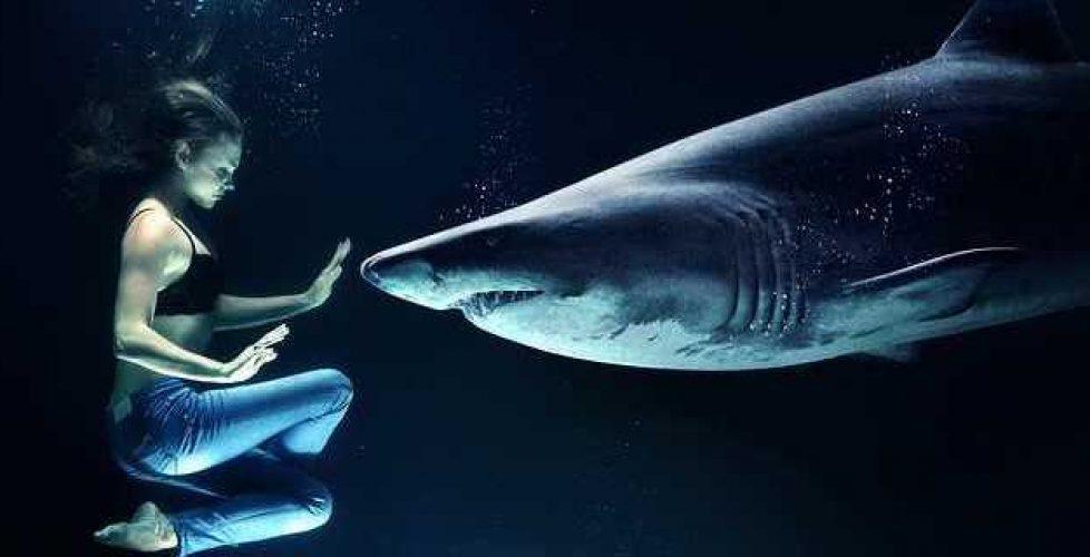 SharkSixthSense